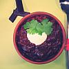Chili Con Carne - med chokolade og kaffe